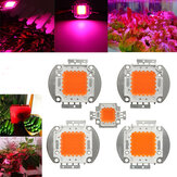 10W 20W 30W 50W 100W 380NM-840NM Tam Spektrum Yüksek Gücü LED Chip Grow Light