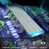 Super wąskie diody LED Oświetlenie akwarium Wodne światło roślin 20-60 cm Rozszerzalna wodoodporna klip na lampę do akwarium Niebiesko białe światło