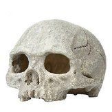 Yani Aquarium Fish Tank Ornament Hars Hoofd Bone Skull Emulational Skelecton Aquarium Decor