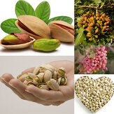 Egrow 5Pcs/Pack Pistachios Seeds Garden Outdoor Nut Tree Fruit Tree Seeds Planting