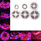 0.5M / 1M / 2M / 3M / 4M / 5M SMD5050 Czerwony: Niebieski 3: 1 Full Spectrum LED Grow Strip Light Plant Lamp