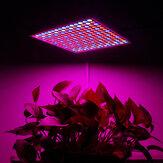 1200W LED Spectrum Grow Light Growing Lamp para hidropônico interno Planta