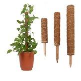 4 Paket Hindistan Cevizi Totem Direği Bitki Hindistan Cevizi Yosunu Çubuk Tırmanma için Totem Direği Bitki Destek Uzatma Tırmanma İç Mekan Bitkis Sürüngenler