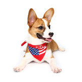 Yani HG-PLJ1 Pet Hond American Flag Collar Pet PU Canvas Decoratieve Cool Collar
