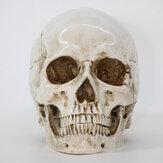 Decoração de cabeça de esqueleto de Halloween Modelo de esqueleto Horror Gótico assustador Caveira Ornamentos de adereços Decoração de atmosfera de Halloween