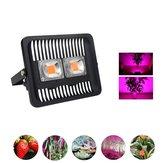 100W Full Spectrum COB LED Planta Grow Flood Light AC220-240V Impermeable para al aire libre interior