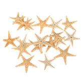 20 Stücke Mini Starfish Sea Star Shell Landschaft Strand Hochzeit DIY Handwerk Machen Dekorationen