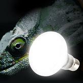 E27 25W 40W 60W 75W 100W UVA電球爬虫類ペットテラリウムブローダーヒーターランプAC220-240V