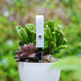 Cây Loskii Máy đo độ ẩm đất Cây máy đo độ ẩm hoa Cảm biến độ ẩm Máy dò độ ẩm có đèn nhấp nháy