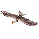 Dancing Wings Hobby DW E19 Eagle V2 1430mm Spanwijdte EPP DIY RC Vliegtuig Vaste Wing KIT / PNP Slow Flyer Trainer voor beginners