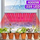4000W 225 LED élèvent la fleur de plante d'intérieur hydroponique à spectre complet de plante légère