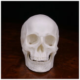Human Skull Handmade Decoration Goth Halloween Decor Gift Souvenirs Ornament