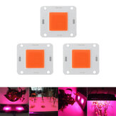 LUSTREON 20W 30W 50W Fuldt spektrum 380-840NM COB Plant Grow Light LED Chip DC30-40V