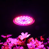 Bombilla LED Grow Light E27 60W 2835 SMD Full Spectrum Planta Hidropónico Acuario AC85-265V