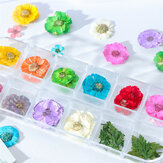 Mix Dried Flowers Nail Decorations Jewelry Natural Floral Le