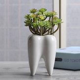 7x10cm Forma de diente Maceta Suculenta Planta Almacenamiento Cerámico Jardinería Maceta Creativa Decoración para el hogar