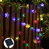 Solar Powered 7M LED Sakura Flower String Light Long Bright + Single Mode/7 Modes Outdoor Garden Blossom Lamp