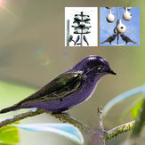 Waterproof Realistic Purple W/ Mount Simulation Bird Decoy Patio Garden Hunting Decoy
