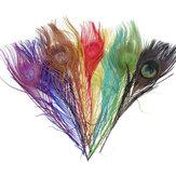 10pcs belas penas de pavão cauda longa naturais
