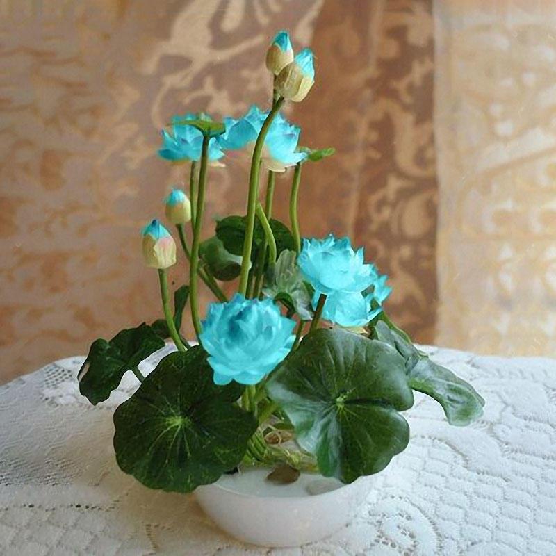 Egrow 5 Adet Lotus Tohumlar Mavi Yeşil Kase Lotus Suyu Lilyası Tohumlar Rare Sucul Çiçek Bitki Tohumculuk