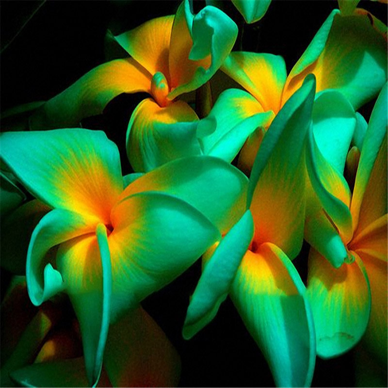 Egrow 100Pcs/Pack Plumeria Seeds Hawaiian Frangipani Flower Garden Wedding Party Decorations