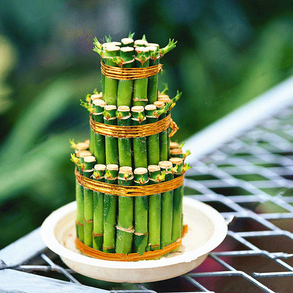Egrow 30 PCS/Pack Lucky Bamboo Bonsai Seeds Small Potted Plants Purify Dracaena Plantas Planting Simple for Home Garden