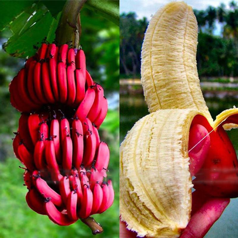 Egrow 40 Unidades / Banana Vermelha sementes Jardim Bonsai Árvore de Frutas Em Vasos