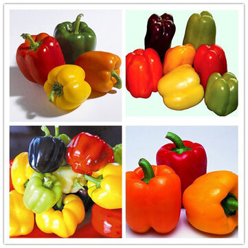 Egrow 50Pcs/Bag Mixed Red Yellow Green Pepper Seeds Colorful Sweet Pepper Seeds  Yellow Purple Red Green White Orange Black Mixed Sweet Bell Pepper Seeds