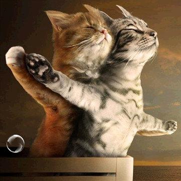 Titanic Jack i Rose Cat 5D DIY Diamentowa Malowanie Haft Cross Stitch Ozdoby