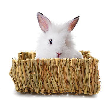 Buy Grass Nest Cave House Snooze Pet Bed Cabin Mat For Pet Guinea Pig Chinchilla  with Litecoins with Free Shipping on Gipsybee.com